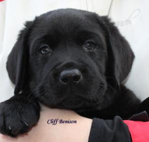 Cliff hlava